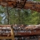 Logging Truck At Lumber Mill Loaded With Logs - VideoHive Item for Sale