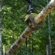 Mechanical Arm Of Feller Buncher Loads Tree Trunks - VideoHive Item for Sale