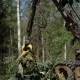 A Specialized Feller Buncher Saws Tree Trunk. - VideoHive Item for Sale