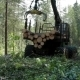 Feller Buncher Loaded With Trees - VideoHive Item for Sale