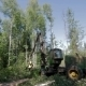 Forest Harvester In Action - Cutting Down Tree - VideoHive Item for Sale