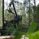 Mechanical Arm Feller Buncher Loads Tree Trunk - VideoHive Item for Sale