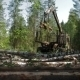 Feller Buncher Drives Through Clearing In Forest - VideoHive Item for Sale