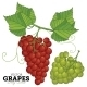 Grape Set, Vector. - GraphicRiver Item for Sale