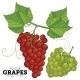 Grape Set, Vector. - GraphicRiver Item for Sale