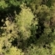 Aerial View Of The Trees - VideoHive Item for Sale