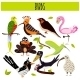 Set Of Cute Cartoon Animals Birds - GraphicRiver Item for Sale