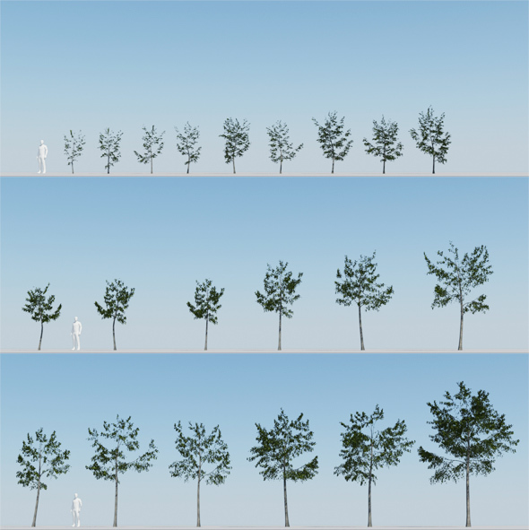 Tree pack - 21 Deciduous Trees - 3DOcean Item for Sale