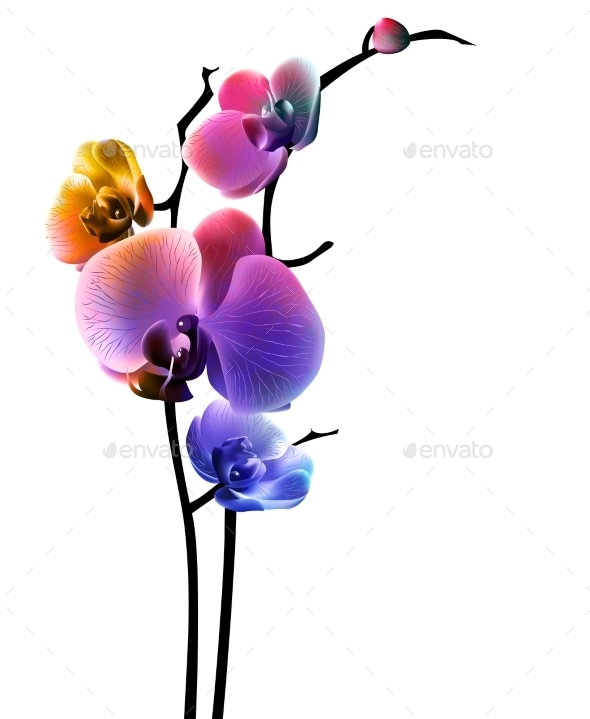 Orchid Isolated Flower - Flowers & Plants Nature