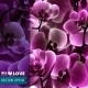 Orchid Flower Template - GraphicRiver Item for Sale