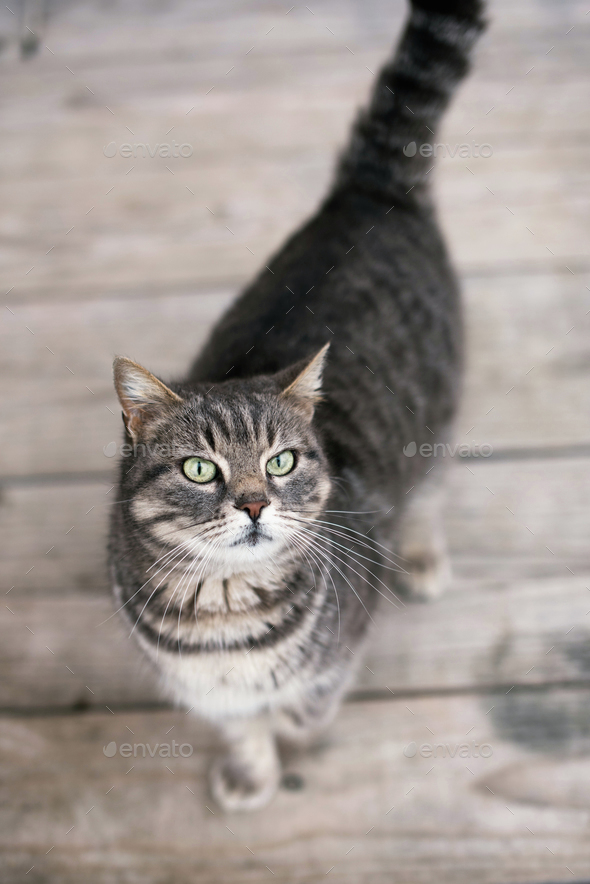 Cute domestic cat - Stock Photo - Images