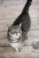 Cute domestic cat - PhotoDune Item for Sale