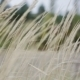 Wild Field Of Grass - VideoHive Item for Sale