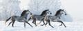 Herd of horses - PhotoDune Item for Sale