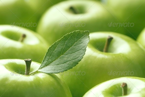 Green Apples - Stock Photo - Images