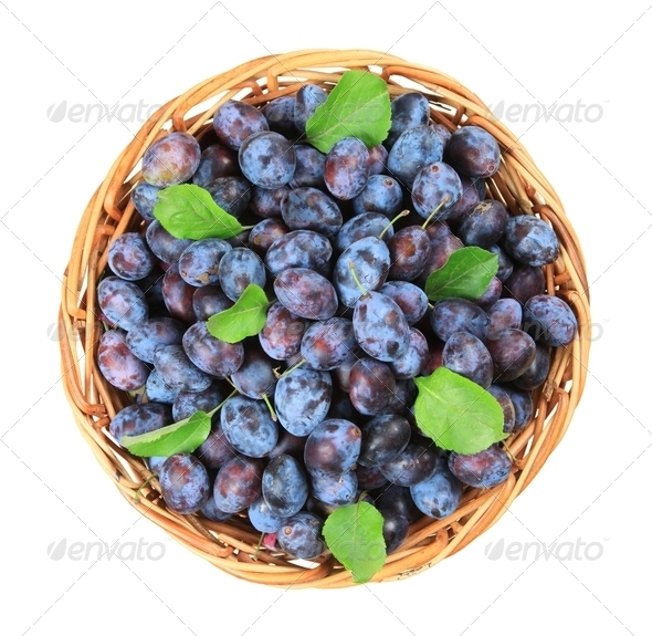 Basket of fresh plums - Stock Photo - Images