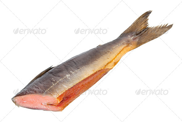 Chum salmon - Stock Photo - Images