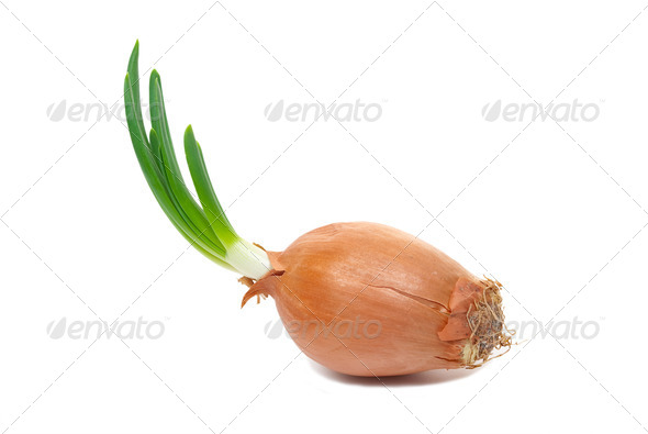Onion with fresh green sprout - Stock Photo - Images
