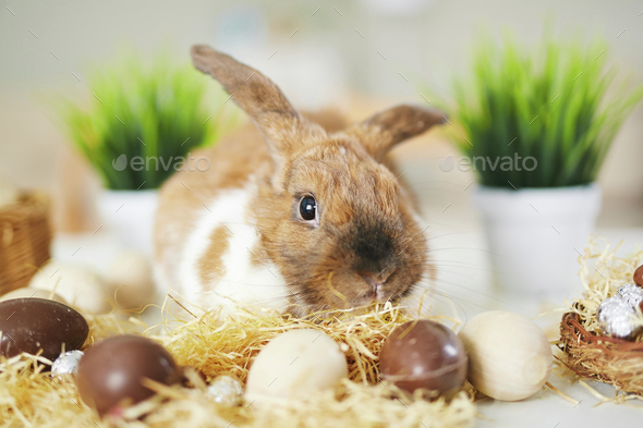 Bunny and chocolate eggs - Stock Photo - Images