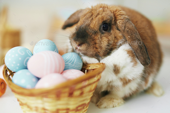 Rabbit and eggs - Stock Photo - Images