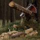 Harvester Cut Down Head Fell a Pine Tree and Cut it into Pieces - VideoHive Item for Sale