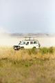 Safari tourists on game drive in Serengeti - PhotoDune Item for Sale