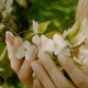 Woman Touching White Flowers In The Spring Park - VideoHive Item for Sale