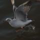 Flock Of Birds On Blue Sky - 13