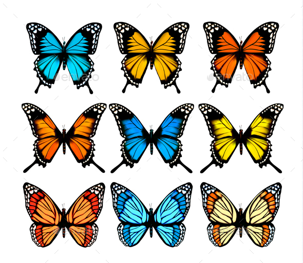Collection of Colorful Butterflies - Animals Characters