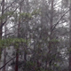 Rain in the Forest - VideoHive Item for Sale