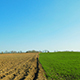 Plowed and Green Field in Spring - VideoHive Item for Sale