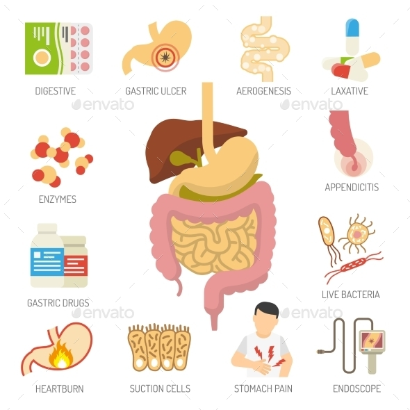 Digestive System Icons Set  - Health/Medicine Conceptual