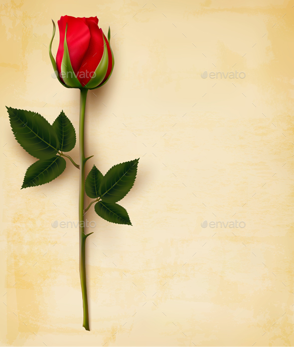 Happy Valentines Day Background Single Red Rose Vector By