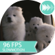 Puppy Opened The Door And Ran Outside  - VideoHive Item for Sale