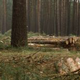 Freshly Felled Forest with single Piles of Logs - VideoHive Item for Sale