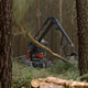 Harvester Felling Machine Lumber a Pine Tree - VideoHive Item for Sale