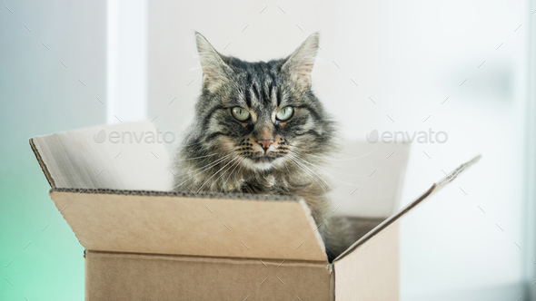 Beautiful cat in a cardboard box - Stock Photo - Images