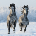 Two Horses - PhotoDune Item for Sale