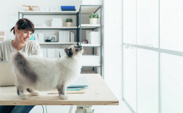 Cat on a desk - Stock Photo - Images