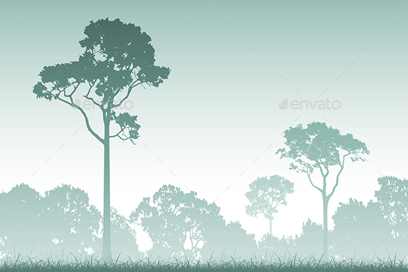 Forest Landscape - Landscapes Nature