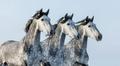 Three horses - PhotoDune Item for Sale