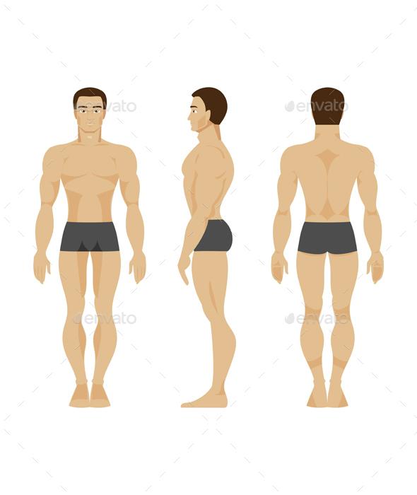Male Anatomy - People Characters