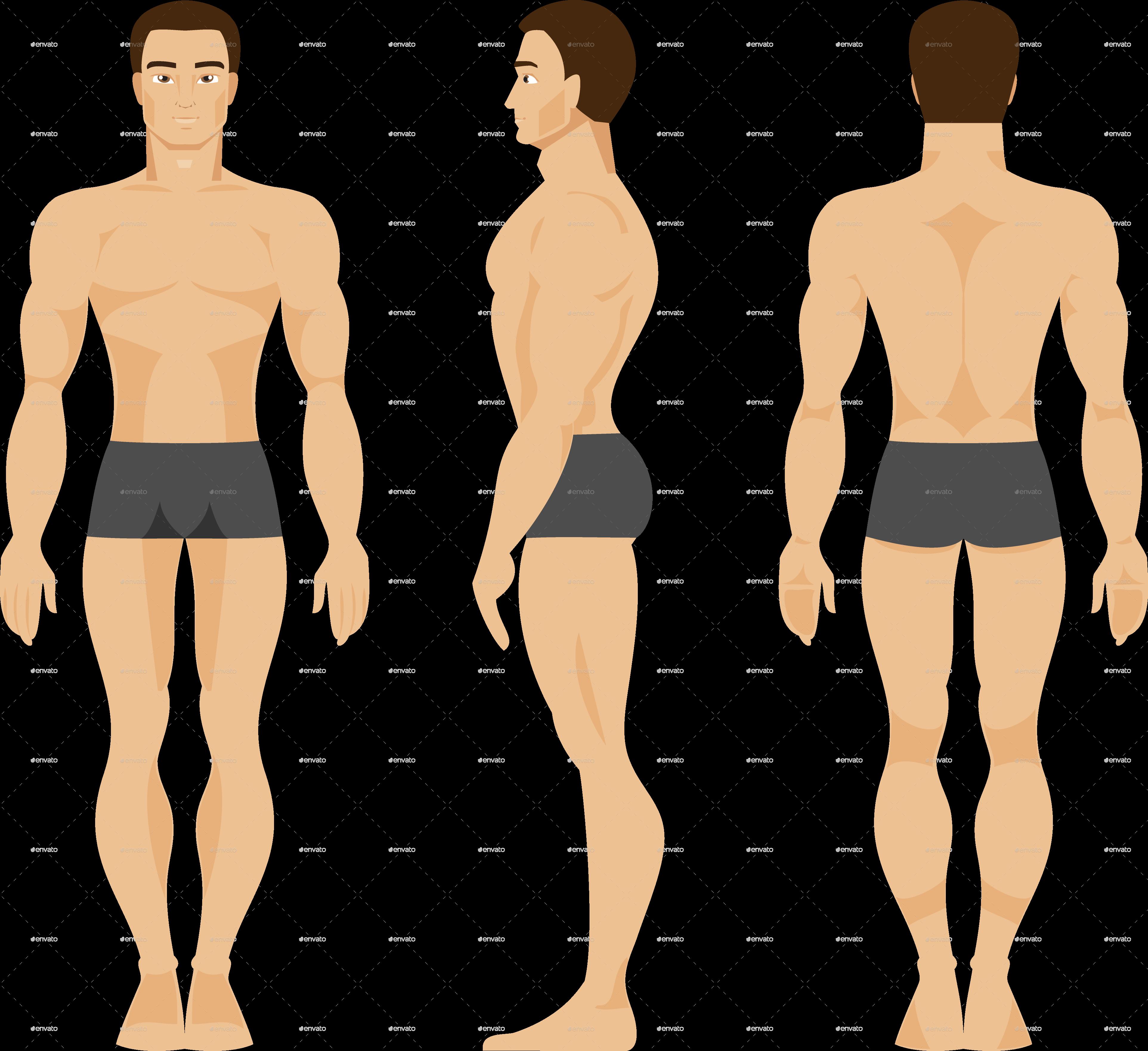 Male Anatomy by artbesouro | GraphicRiver