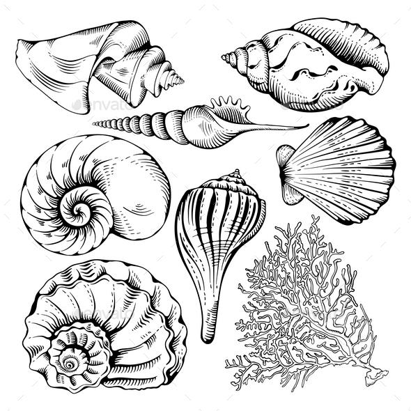 Shell Set - Nature Conceptual