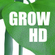 Grow Bean - VideoHive Item for Sale