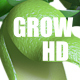Grow pea - VideoHive Item for Sale
