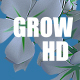 Grow buckwheat - VideoHive Item for Sale