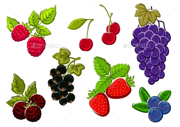 Isolated Garden And Wild Berries Fruits - Food Objects