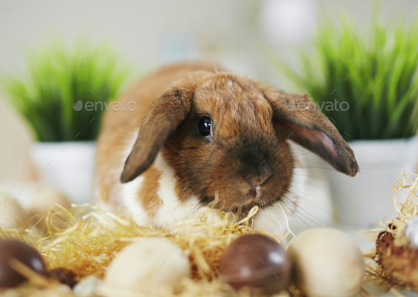 Fluffy symbol of Easter - Stock Photo - Images