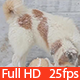 Dog in the Winter - VideoHive Item for Sale